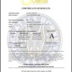Galia Certificate