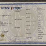 Nelly Certificate - Battle Born Dobermans